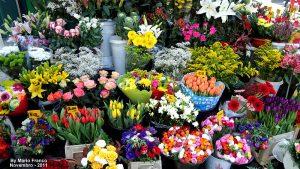 Florista em Suzano - SP